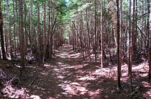 Katahdin Abol Trail Beginning