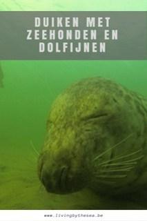 Duiken met zeehonden en dolfijnen