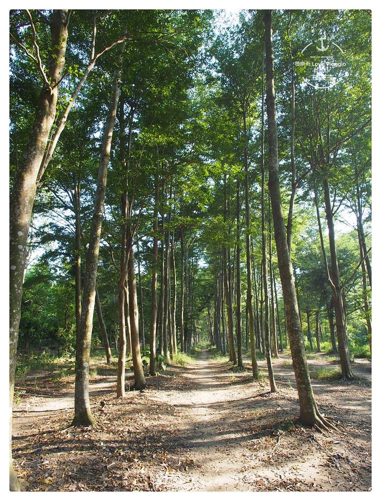 台南IG,台南景點,台南森林步道,森林,虎山林場,虎山森林步道 @薇樂莉 Love Viaggio | 旅行.生活.攝影