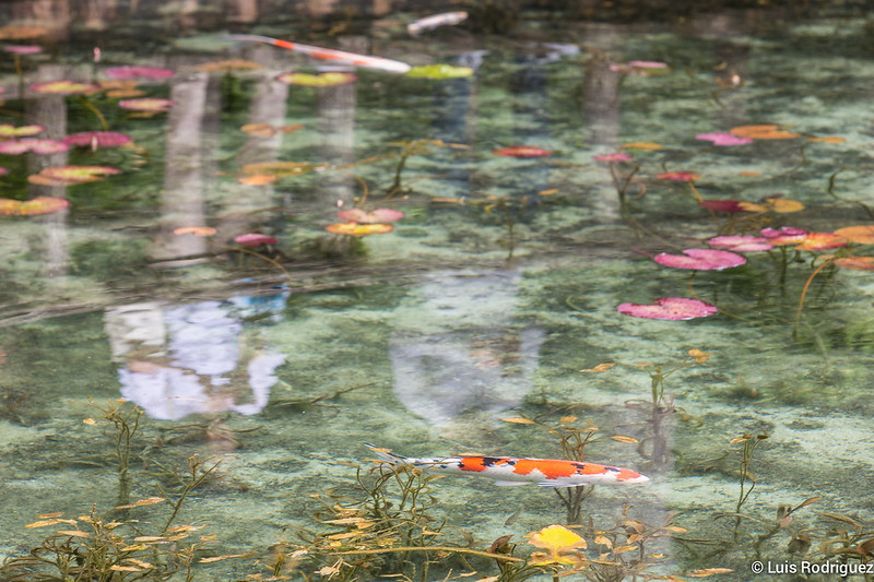 Estanque-Monet-Gifu-16