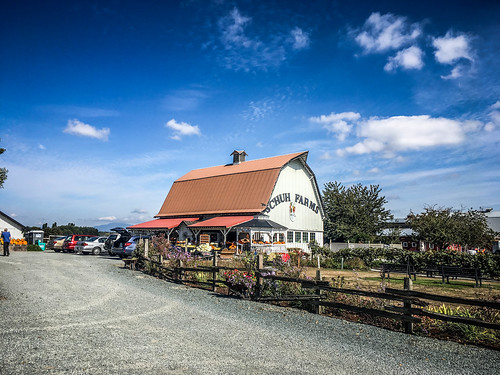 Schuh Farms and Pumpkins
