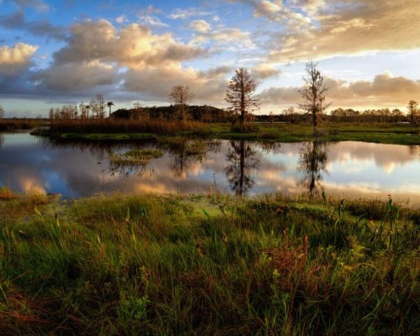 Marsh Morning II