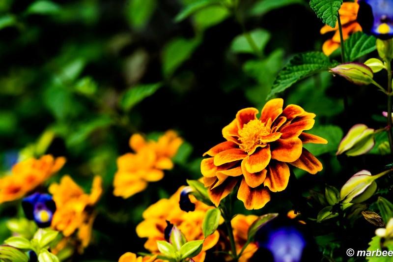 Bloom on the roadside