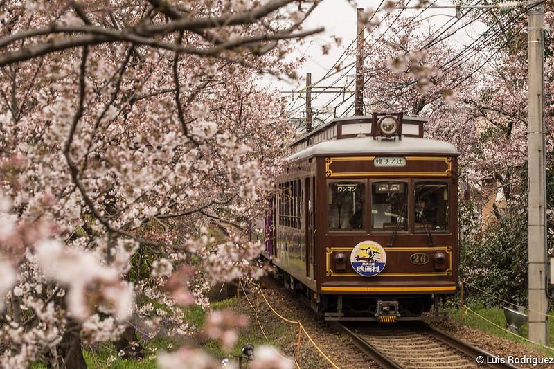 Tunel-Sakura-Kioto-Randen-21