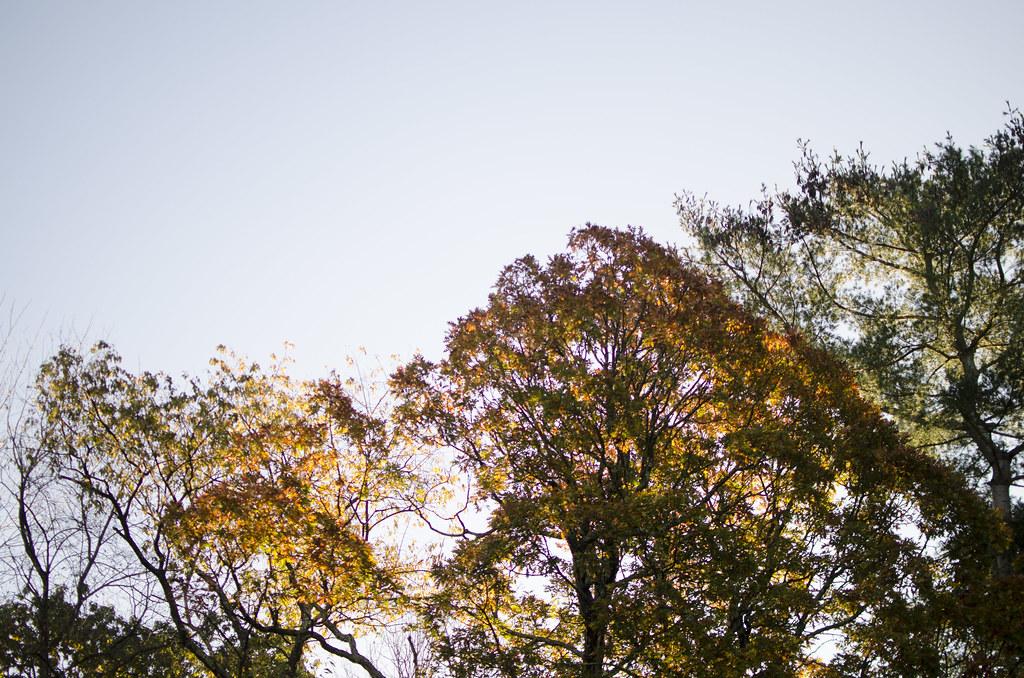 praise the fall 6