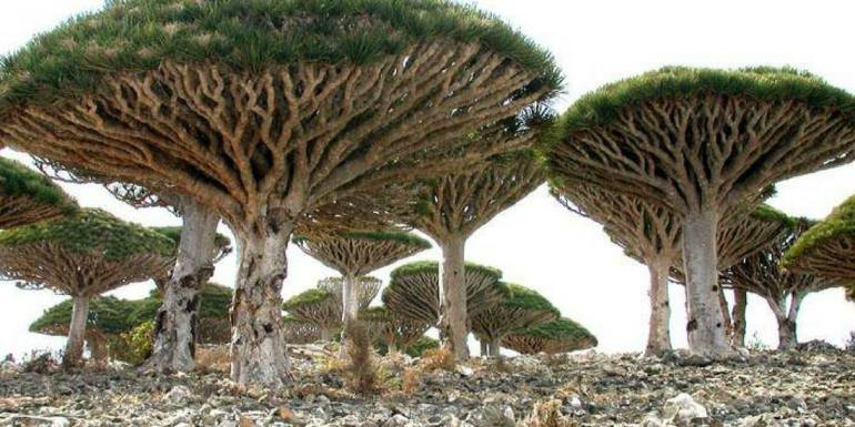 Socotra diving