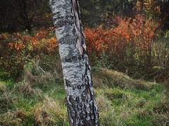 PB030934_Snapseed