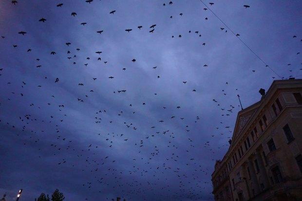 Sky full of birds in Unirii Square