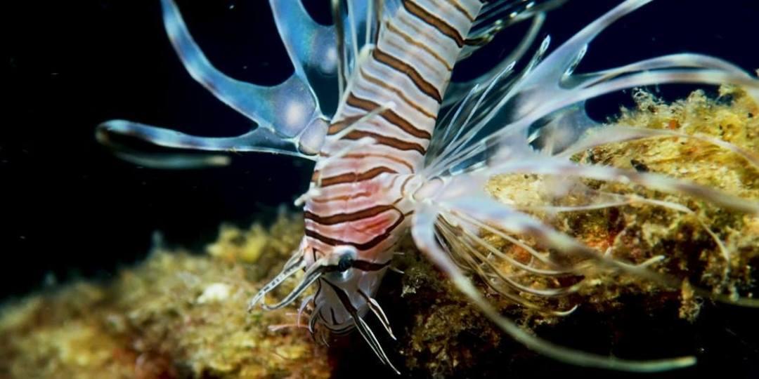 scuba diving Socotra