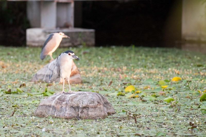 臺大鳥日子 第一季
