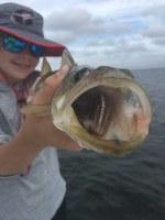 Tampa Bay snook fishing