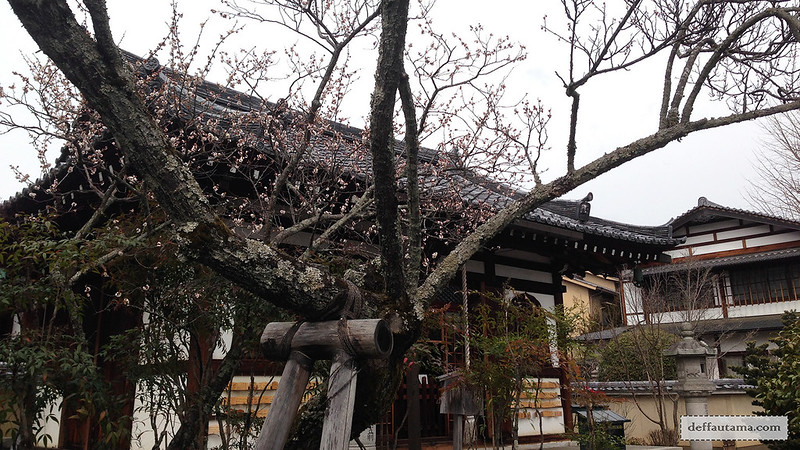 3 Hari Keliling Kyoto - Sakura