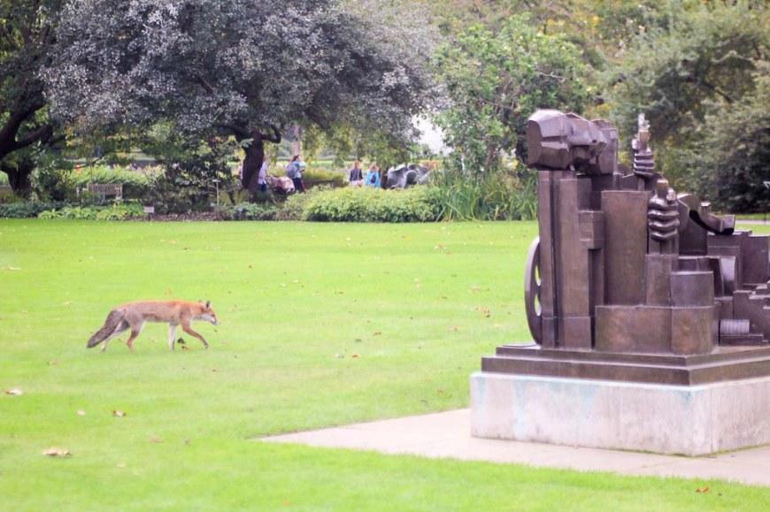 A fox passing by through a field, heading towards a sculpture, at Kew Gardens, London