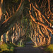 Ireland - The Dark Hedges