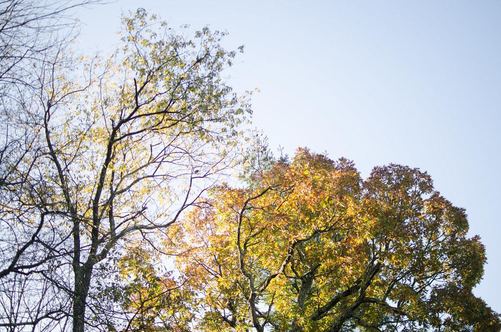 praise the fall 9