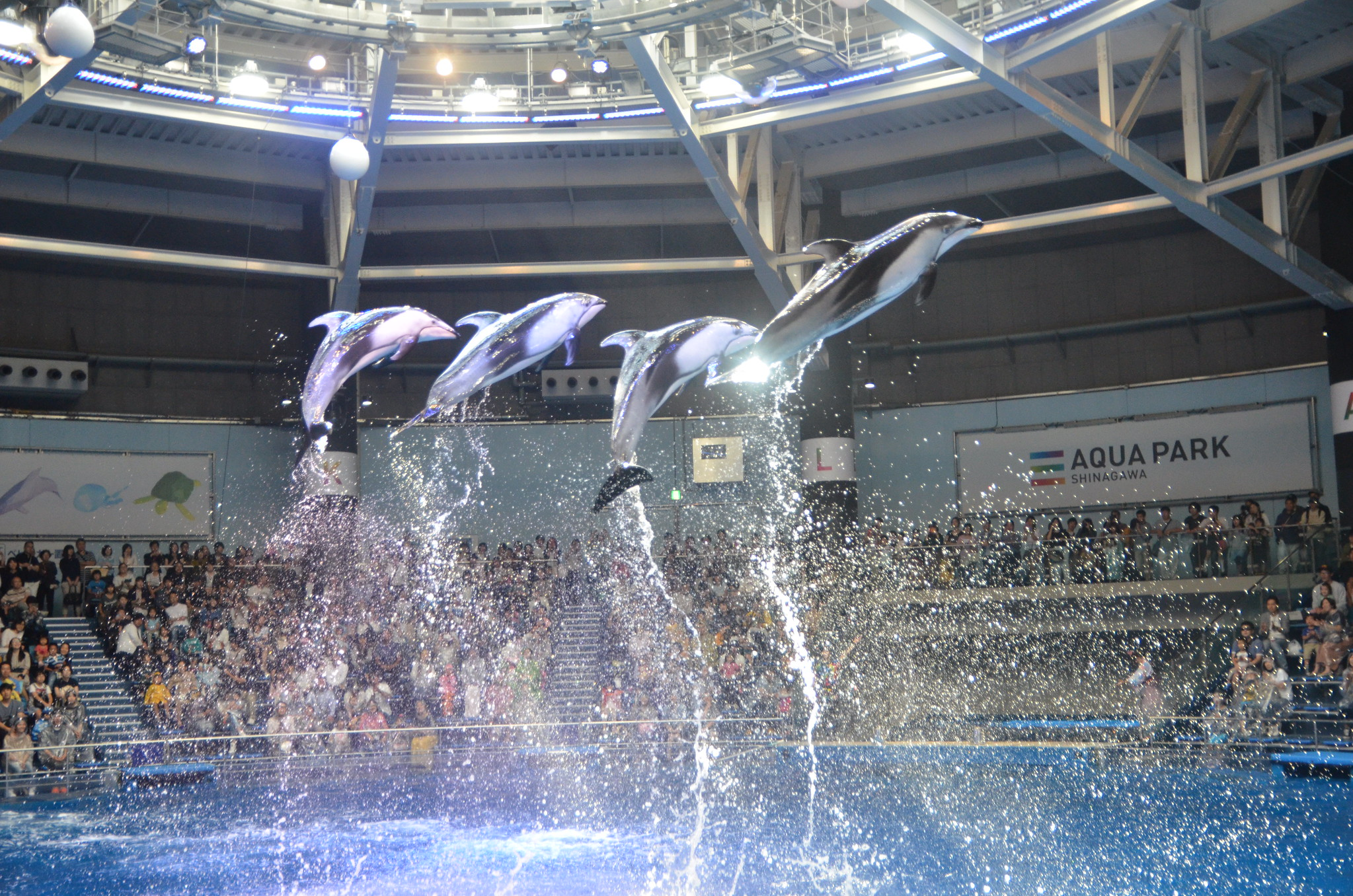 Four dolphins jumping