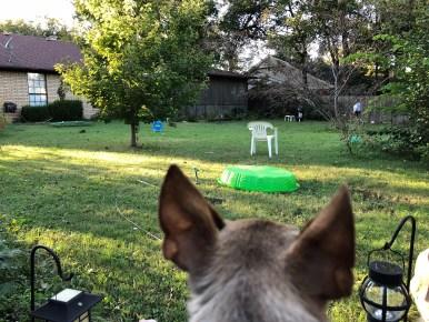 Dobby says yep, autumn is here