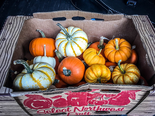 Schuh Farms and Pumpkins-022