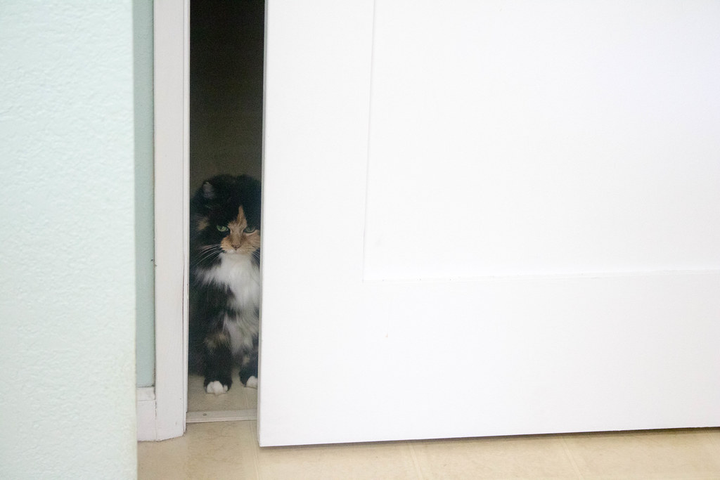 Bella spying on my