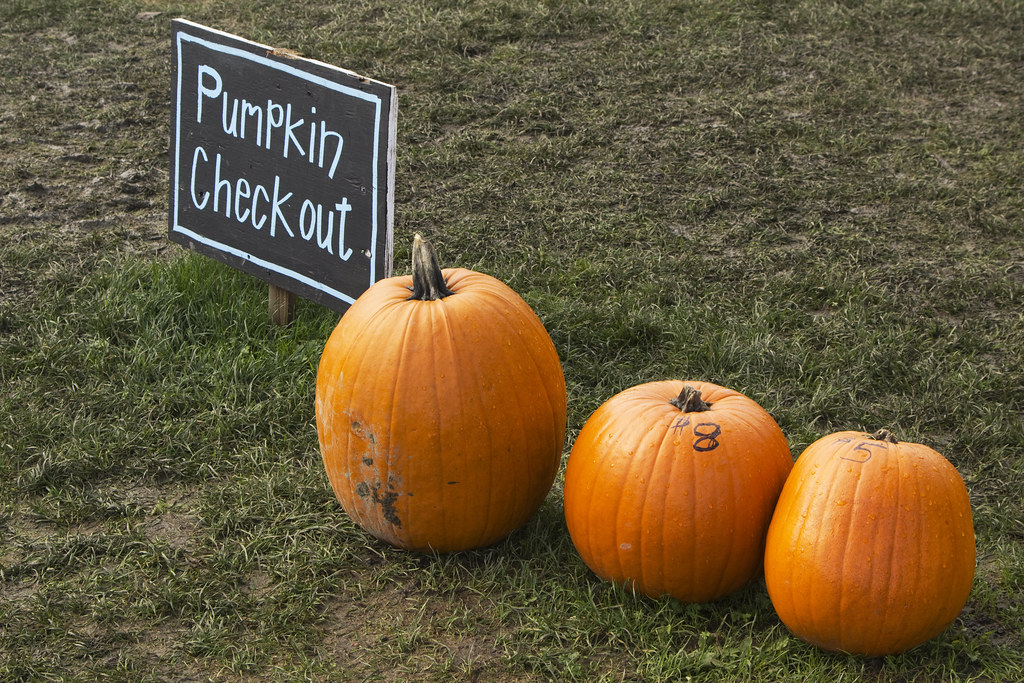 pumpkin pricing