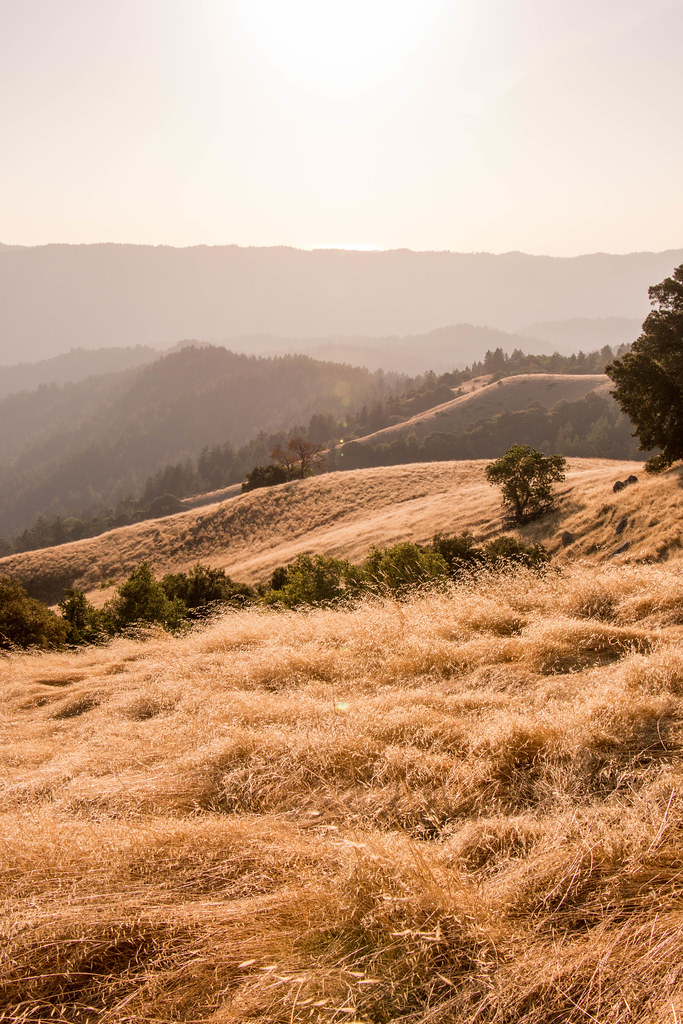 10.15. Long Ridge Open Space Preserve