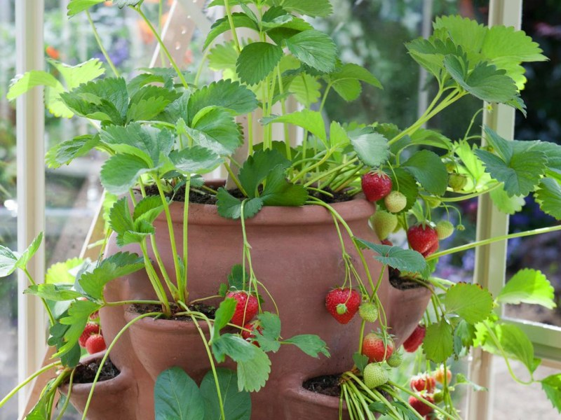 small space gardening using planters