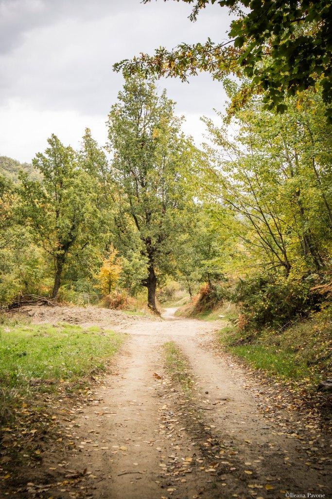 Bosco_autunno