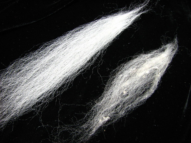 SW BFL (left), NE Fine Grey (right)