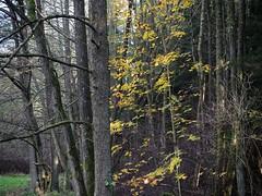 PB030902_Snapseed