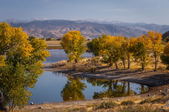 Topaz Lake Cottonwood Trees