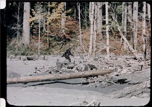 Patterson-Grimlin Frame 352