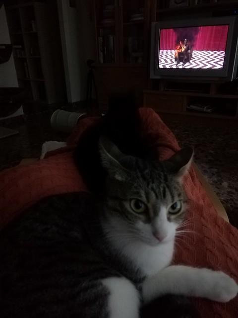 Ororo y yo viendo Twin Peaks