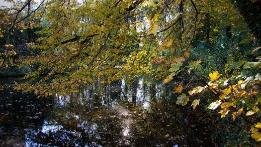 2017-10-15_Wasserschloss Burggraben
