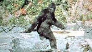 Famous Bigfoot Image