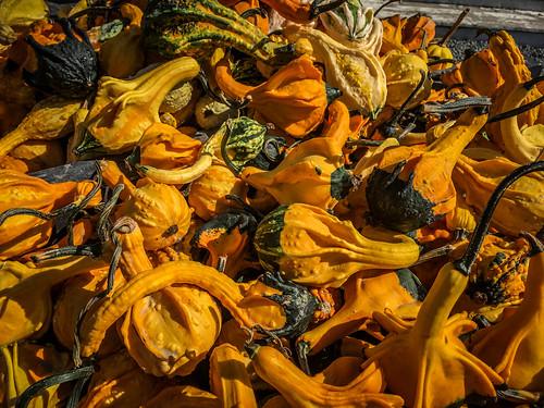 Schuh Farms and Pumpkins-006