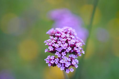 Little Blossoms Flower