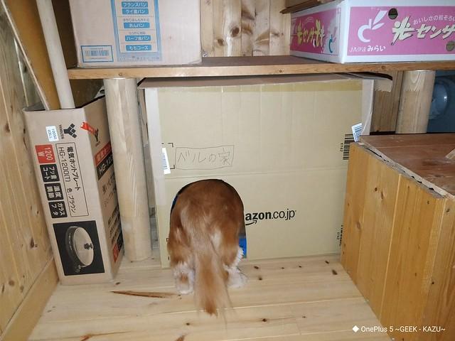 ハリーポッターより貧相な階段下の部屋を作った (3)