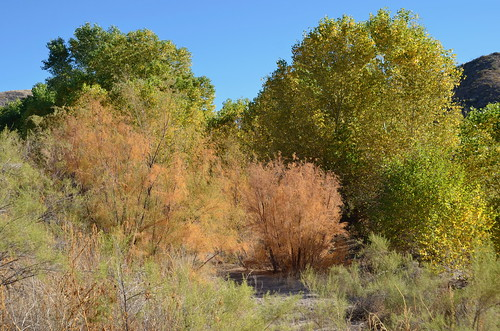 Gila Box Riverview Campground colours on the trail