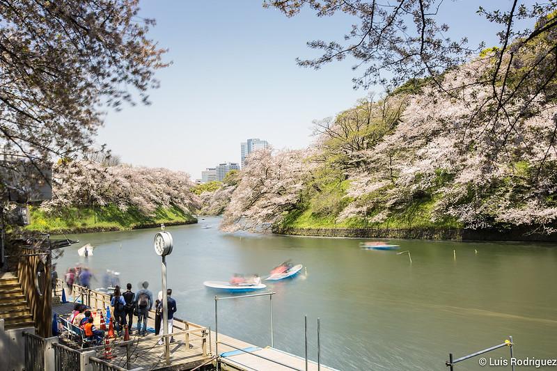 Sakura-Chidori-ga-Fuchi-Palacio-Imperial-48