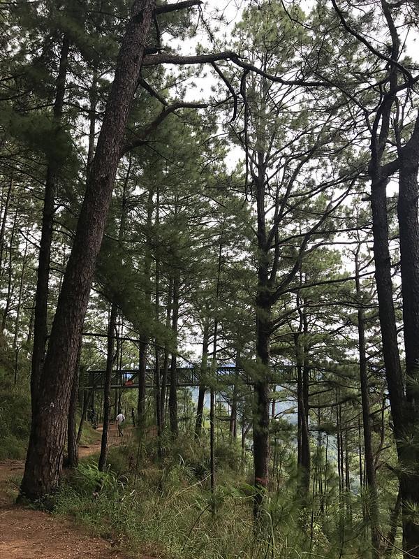 20171109_095824 Baguio - Tree Top Adventure