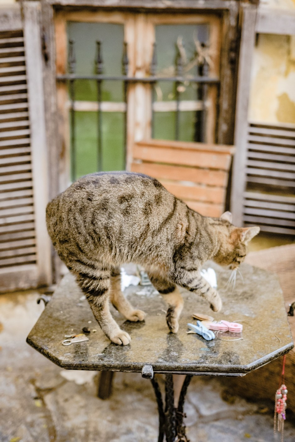 Athens travel diary with cats-4