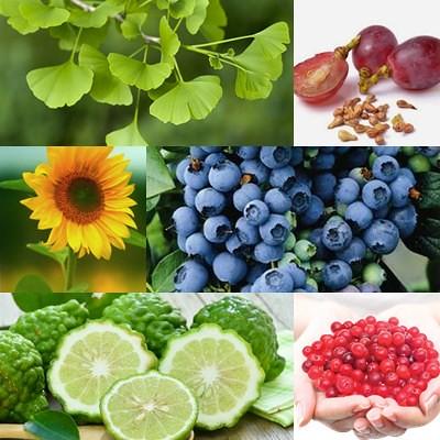 Herbal Untuk Pengobatan Penyakit Mata