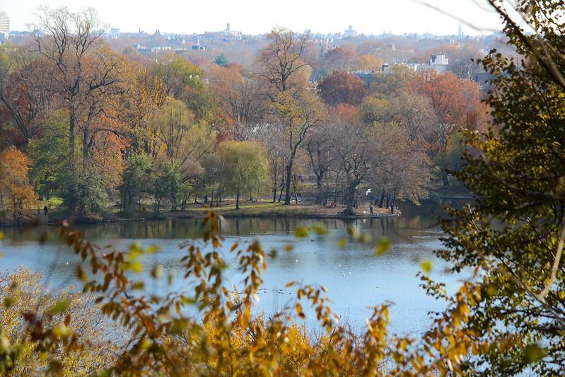 Park Slope Fall Foliage
