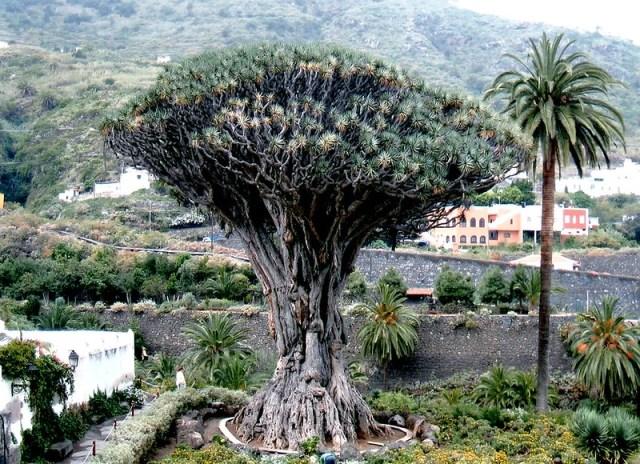 Que ver en Tenerife004
