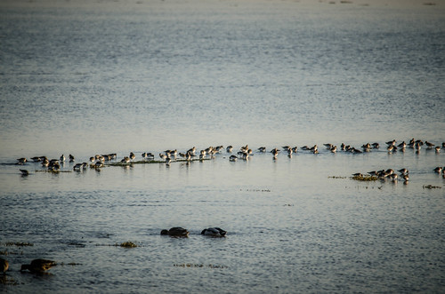 Skagit Birds and Sunset-14