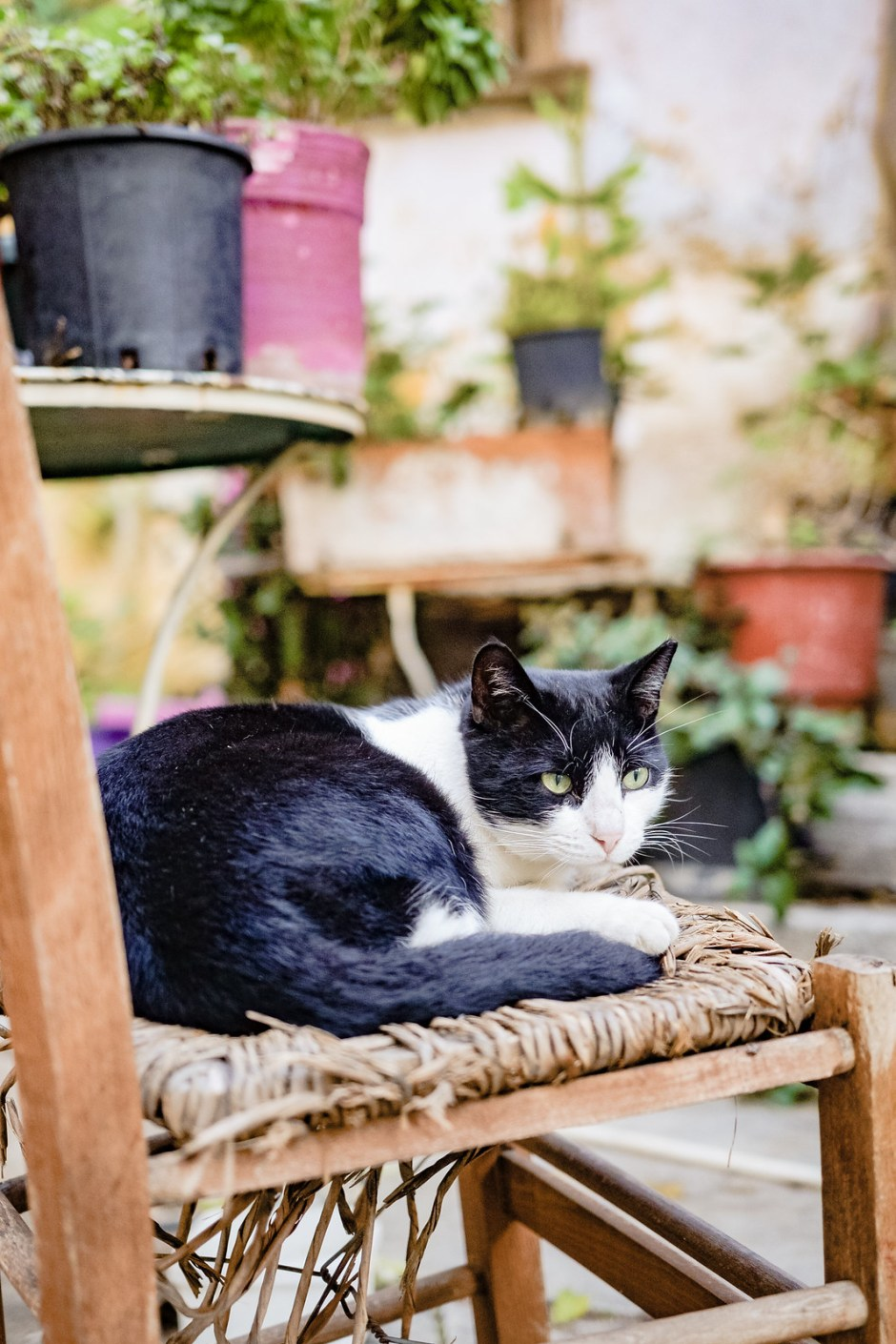 Athens travel diary with cats-5