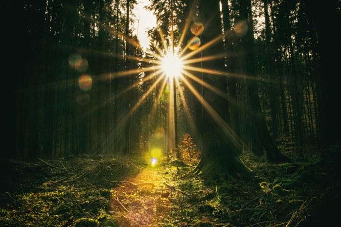 Like Sunbeams