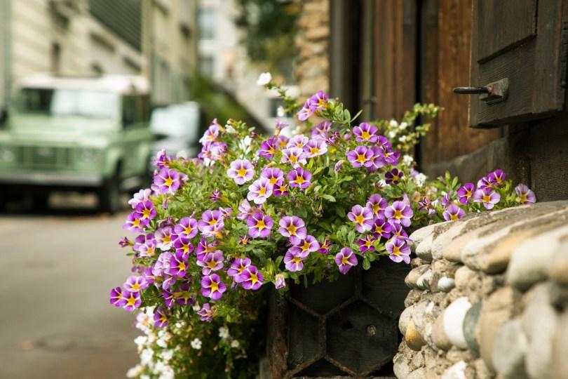Street Flora