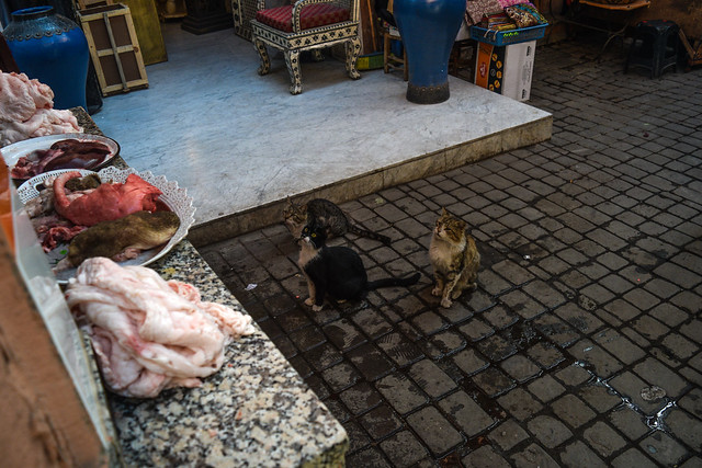 Cats Await the Butcher