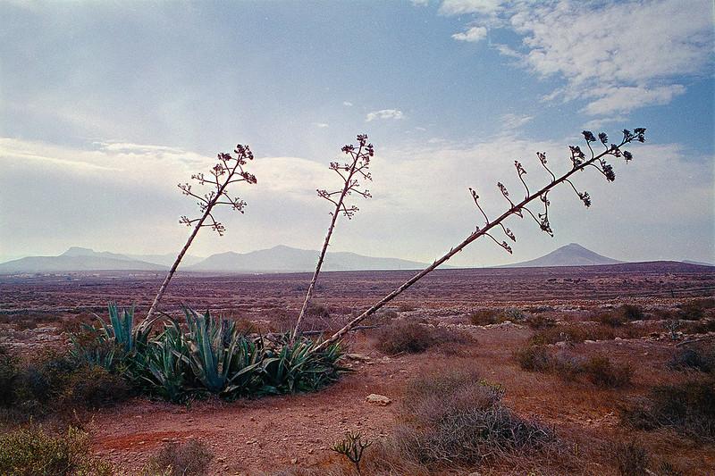 Leica Elmarit-M 28mm Landscape